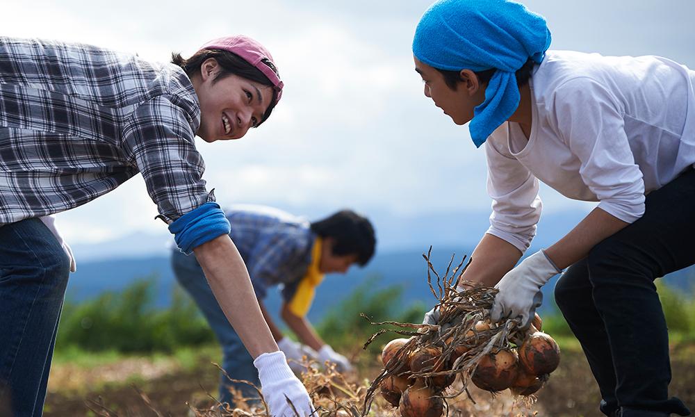 土つきの玉葱を収穫する20代の男性達