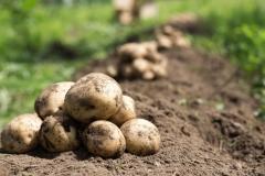 野菜がのびのび育つ土とは~畑の土~