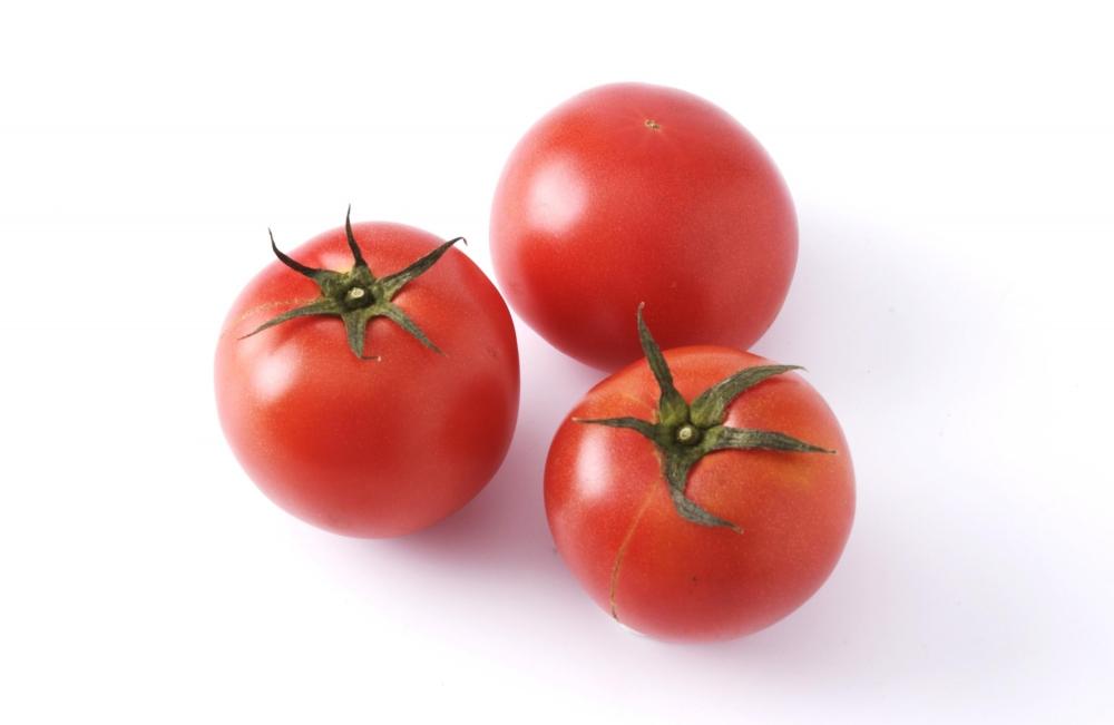 トマト の 栽培 方法